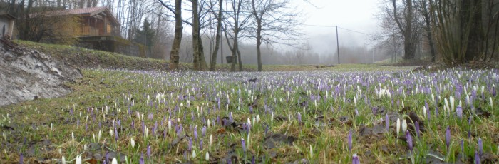 La primavera incalza!